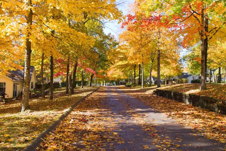 Fall-colors-rajhazare_MG_1629pp