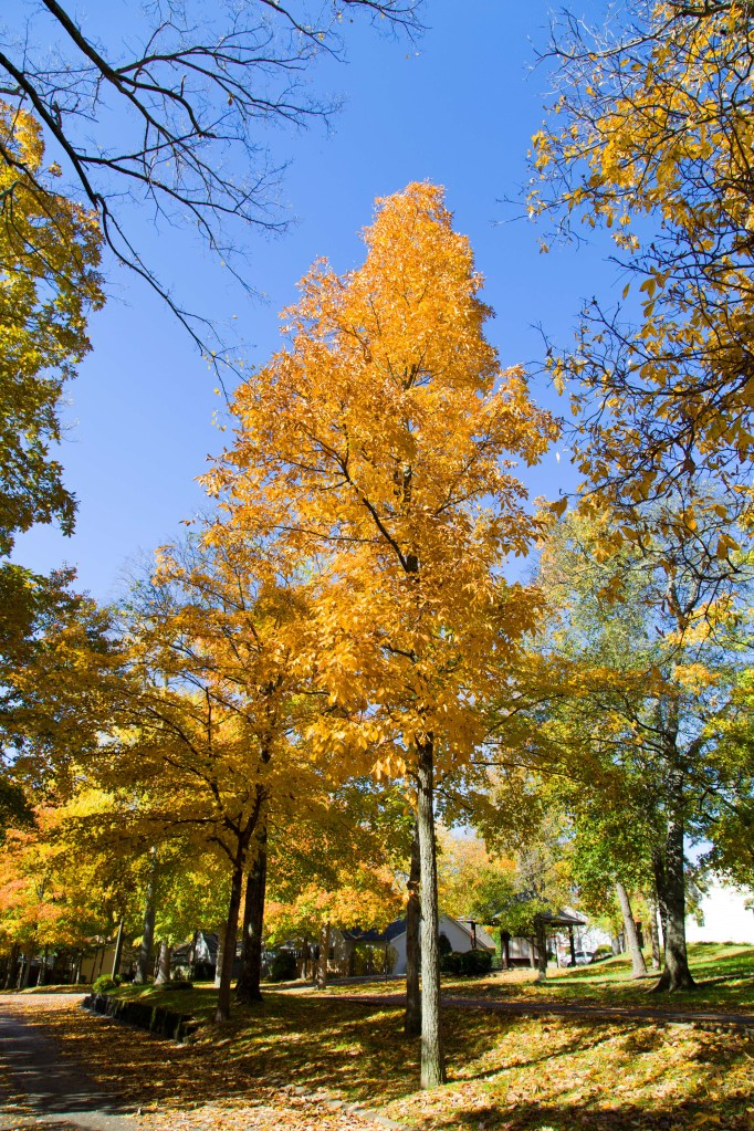 Fall-colors-rajhazare_MG_1630pp
