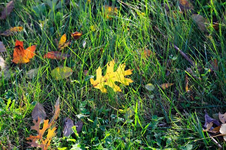 Fall-colors-rajhazare_MG_1675