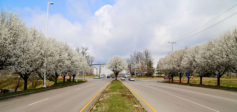 Spring in Nashville 2014. Photo by Raj H.